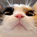 :cat_ktrk_la:
